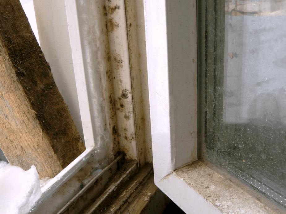 Образование плесени на окне